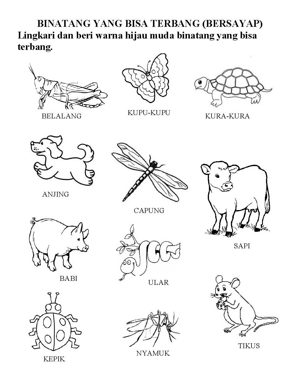 48 Koleksi Contoh Gambar Binatang Untuk Anak Paud Terbaru