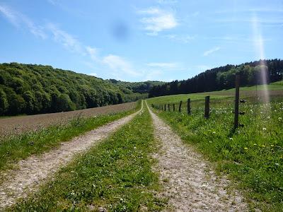 Ein Weg führt über eine Wiese