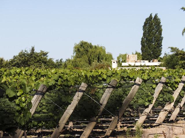 Clos de Chacras vineyard in Mendoza Argentina