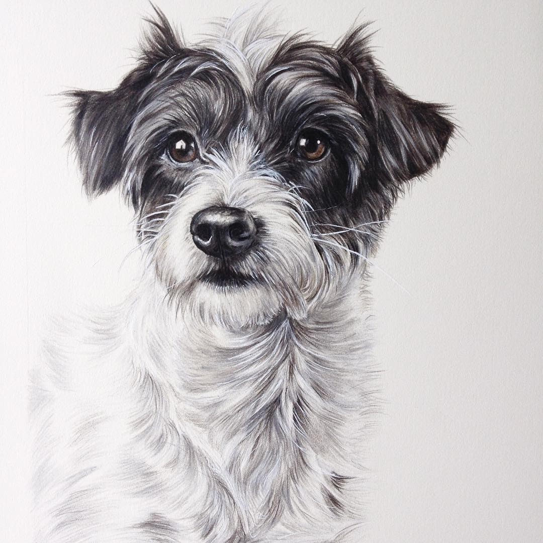 12-Tilly-Zoe-Fitchet-Pet-Portraits-Cats-and-Dogs-Drawings-www-designstack-co