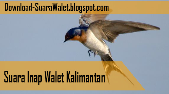Download Suara Inap Walet Kalimantan