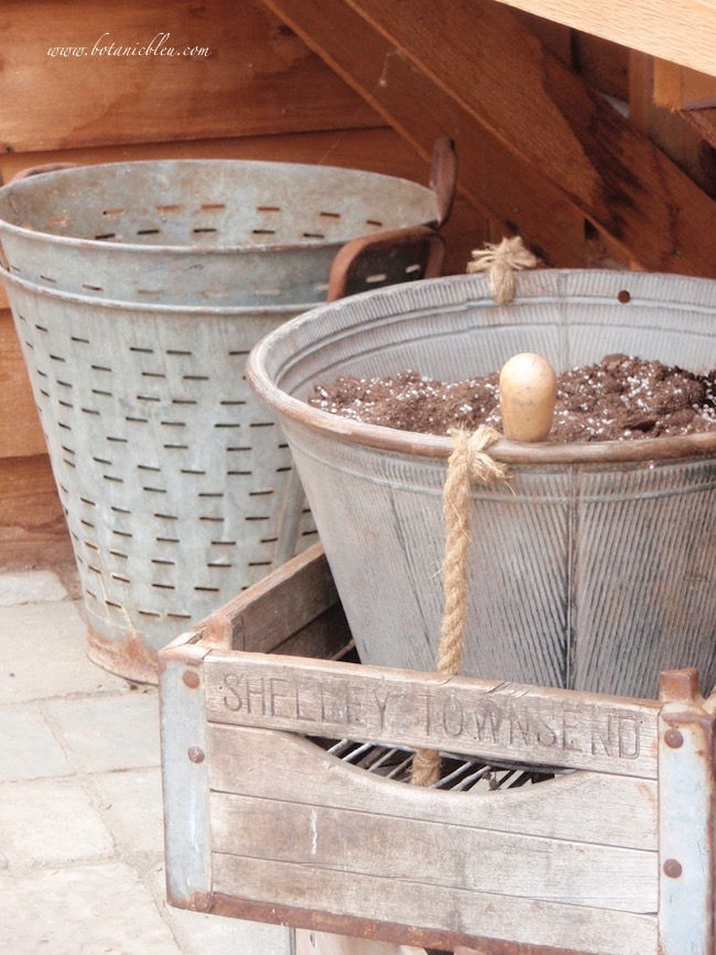 Magnolia Garden Greenhouse Metal Buckets