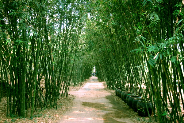 Phu An Bamboo Village, A Essential Destination  for the Young