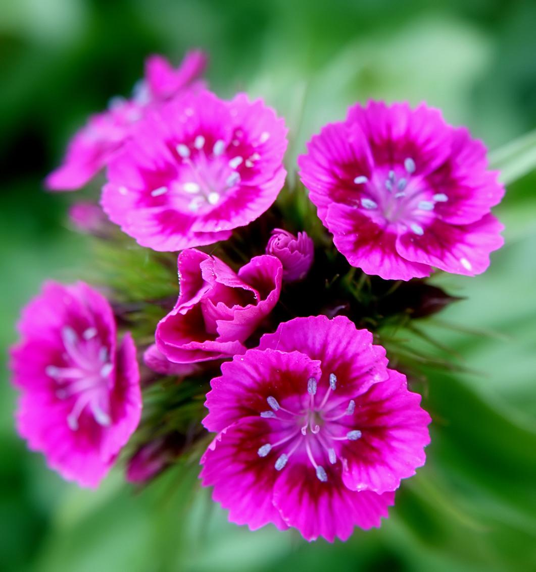 Beautiful Flower For Wallpaper: Flowers For Flower Lovers.: Flowers Beauty Desktop Wallpapers