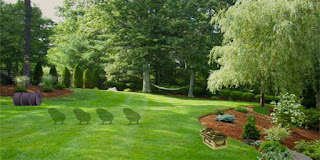 Landscape Lawn Escape Solución