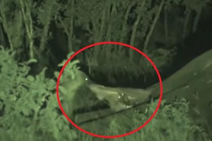 Ini yang Terjadi Saat Gajah Besar Mati di Alam Liar