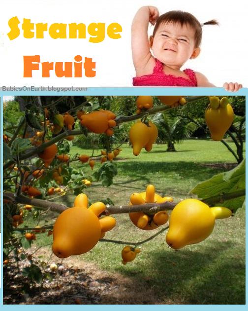 Baby Strangefruit