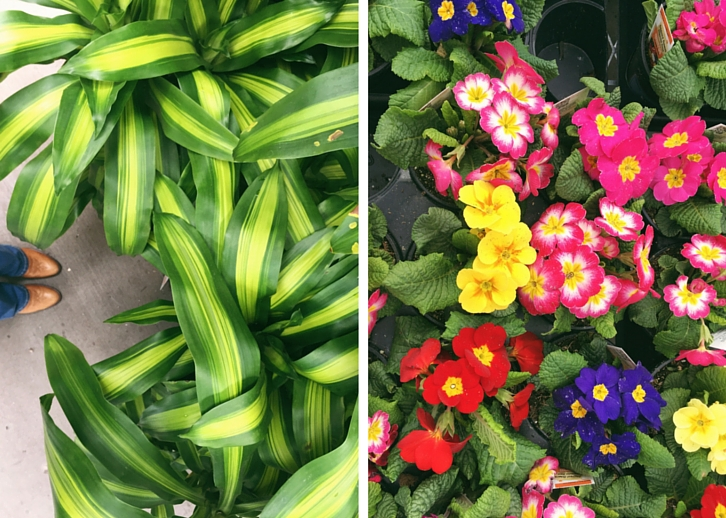 Tropical Plants and Spring Blooms // WWW.THEJOYBLOG.NET