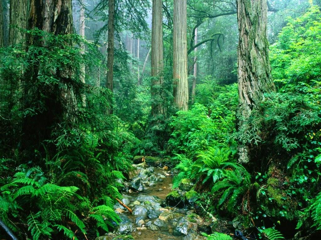 Macam-macam Ekosistem | Rickypedia
