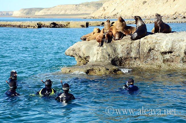 Punta Alt - Buceo con lobos marinos en Puerto Pirámides