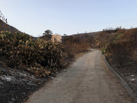 Fish Fire damage along the access drive adjacent to Opal Canyon Road, Duarte, June 23, 2016