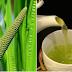 Planta care face minuni în lupta cu CANCERUL DE COLON, CANCERUL STOMACAL, GASTRITĂ, ULCER, INFECŢII INTESTINALE