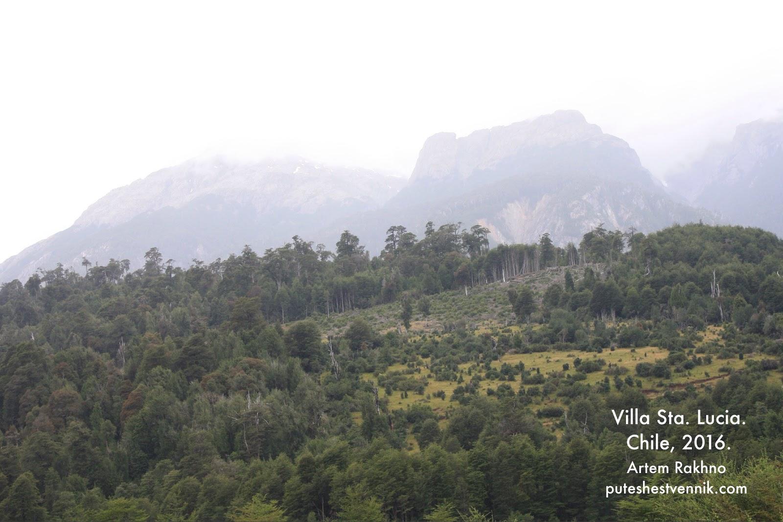 Лес и опушка на склоне гор в Чили