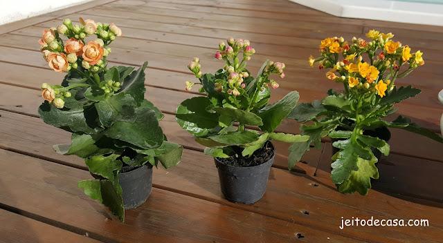 decoração-flores-calandivas