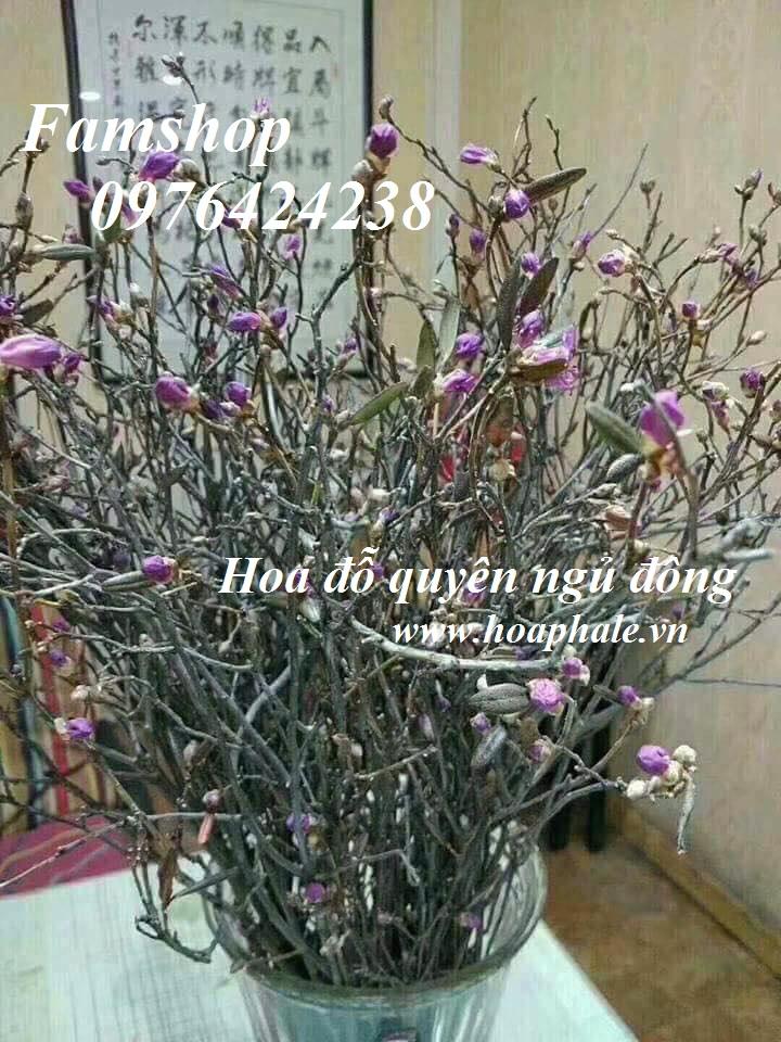 Hoa do quyen ngu dong tai Dong Anh