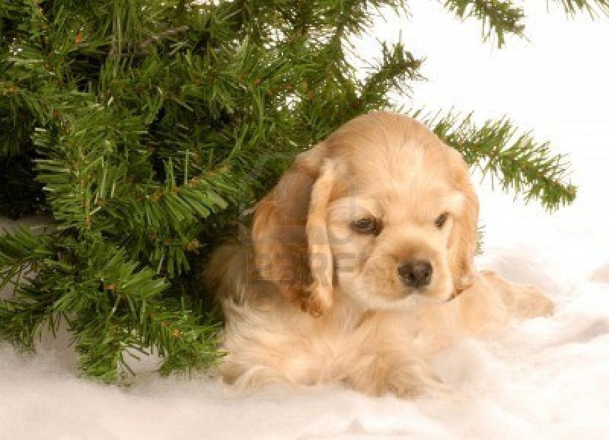 Collie Terrier Heeler Border