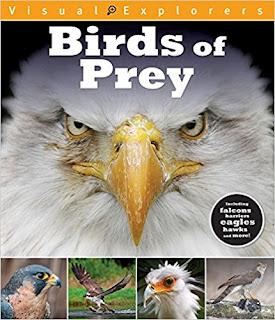 Visual Explorers: Birds of Prey