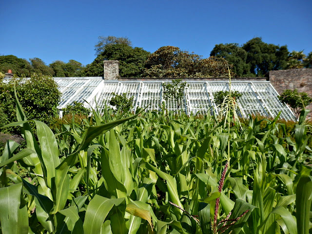 Greenhouses at Lost Gardens of Heligan
