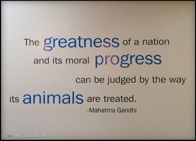 The Greatness of a Nation quote by Gandhi