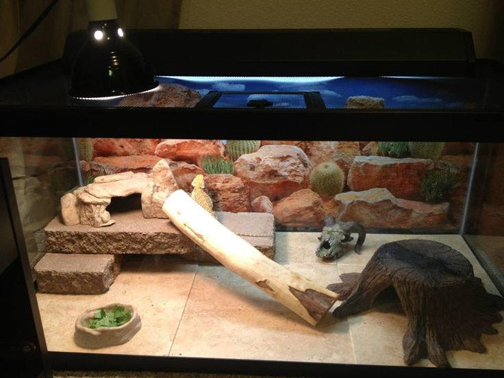 Bearded Dragon Accessories Amp Substrate Bearded Dragon
