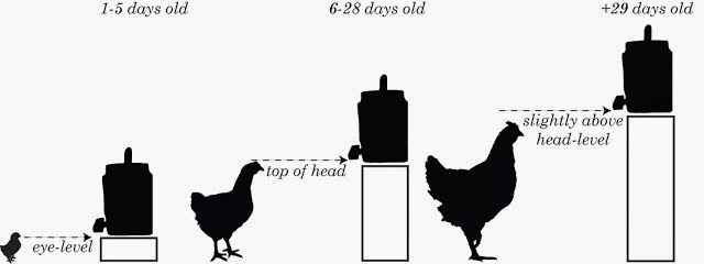 Eye Diagram Of Chicken Volvo Penta 280 Outdrive Waterer: How To Raise Baby Chicks: Water