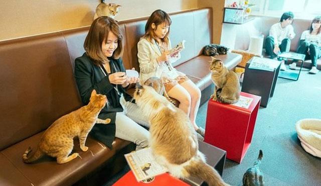 Bersantai-Di-Kafe-Kucing