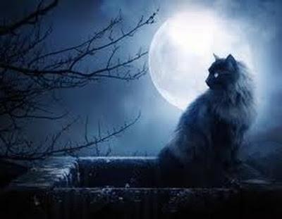 gato-mito-mith-cats