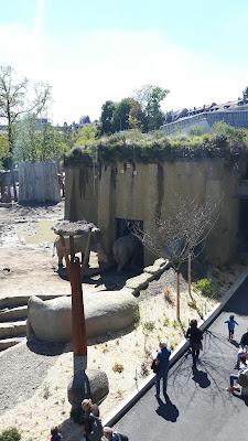 die neue Elefantenanlage mit Storchennest im Zolli Basel