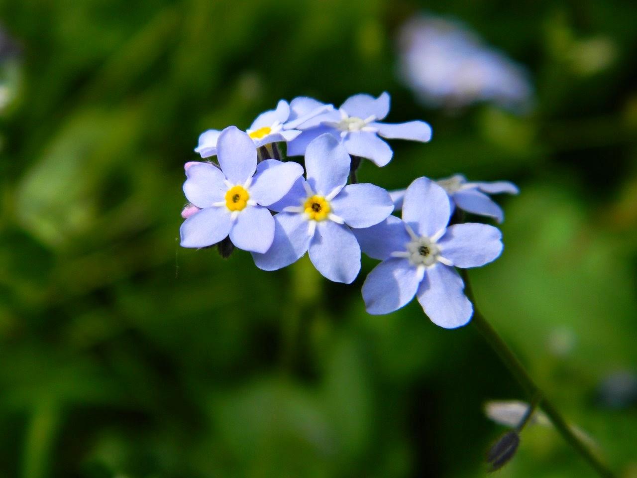 kwiatki z bajki, wiosna