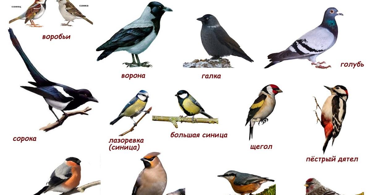 Птицы фото и их названия