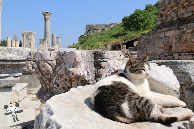 A calm cat enjoyed sunbathing at Ephesus site in Kusadasi, Turkey