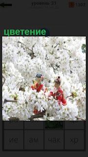 1100 слов две женщины в середине цветения цветов 31 уровень
