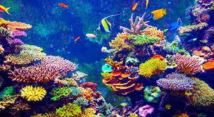economic value of coral reef