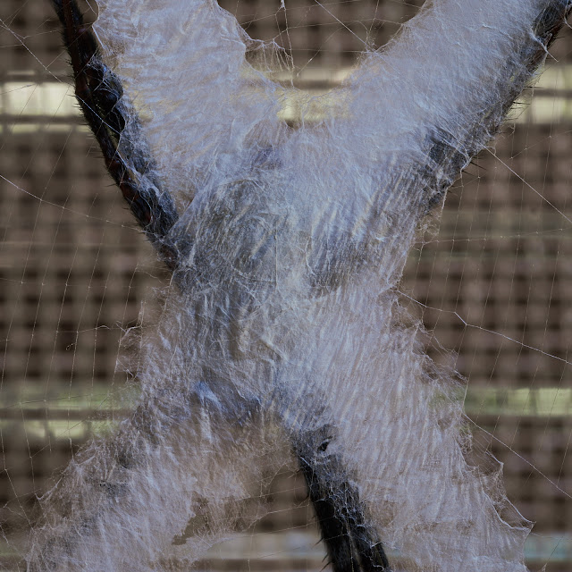 St. Andrews Cross Spider's Web, macro photography, Philippines, beauty