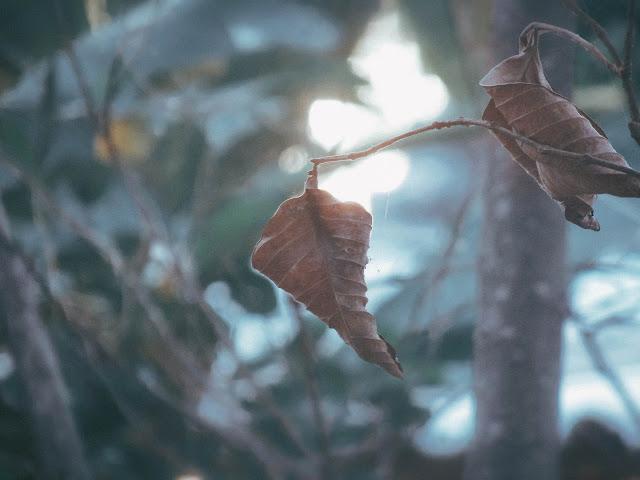Hình ảnh mùa đông buồn cô đơn và tâm trạng nhất năm
