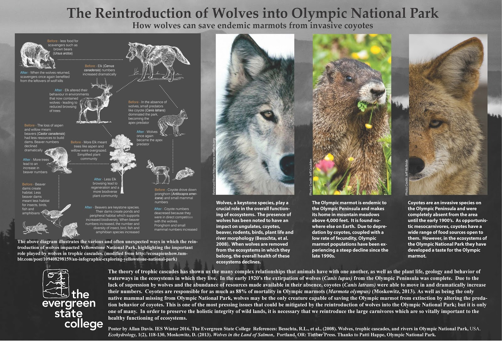 wolves as the keystone species of the greater yellowstone area Start studying apes irg ecosystem structure in reference to the grey wolf as a keystone species in the greater yellowstone the particular area within a.