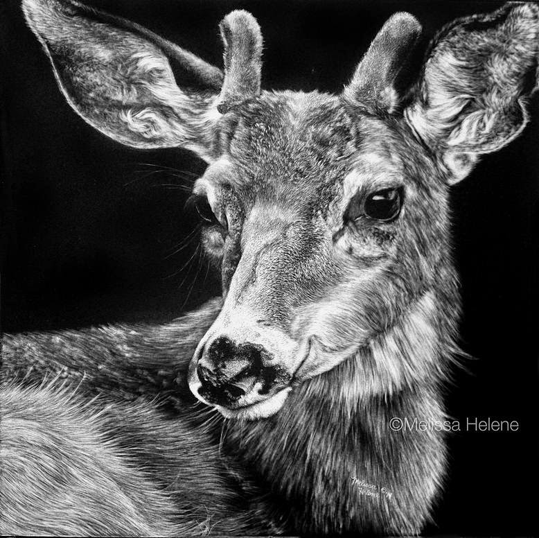15-Young-Deer-Melissa-Helene-Amazing-Expressions-in-Scratchboard-Animal-Portraits-www-designstack-co