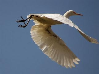 Výsledek obrázku pro crane's wife ness