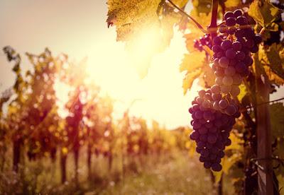 produzione vino global warming