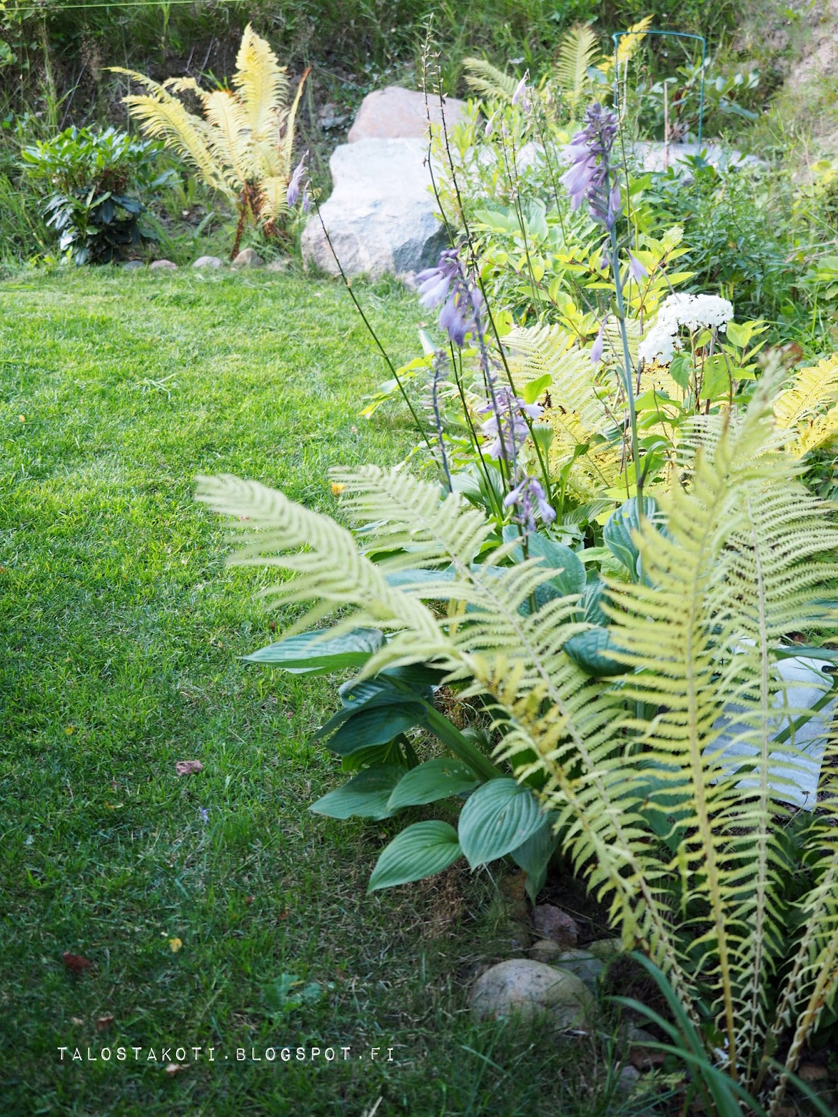Puutarha, kukkapenkki, istutukset