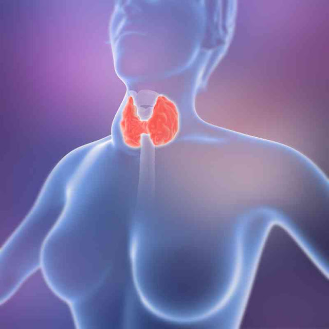 What Is Thyroid Disease And Its Signs, Symptoms, Causes, And Treatments