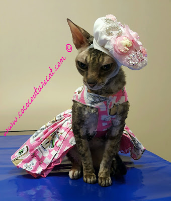 Coco, the Couture Cat in her Pink Paris dress and beret