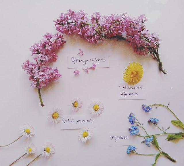 Majowe zbiory dzikich roślin