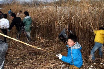 ヨシ刈り体験会!芦田川人工湿地帯