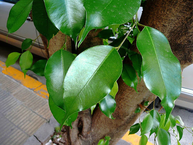 Rama de árbol