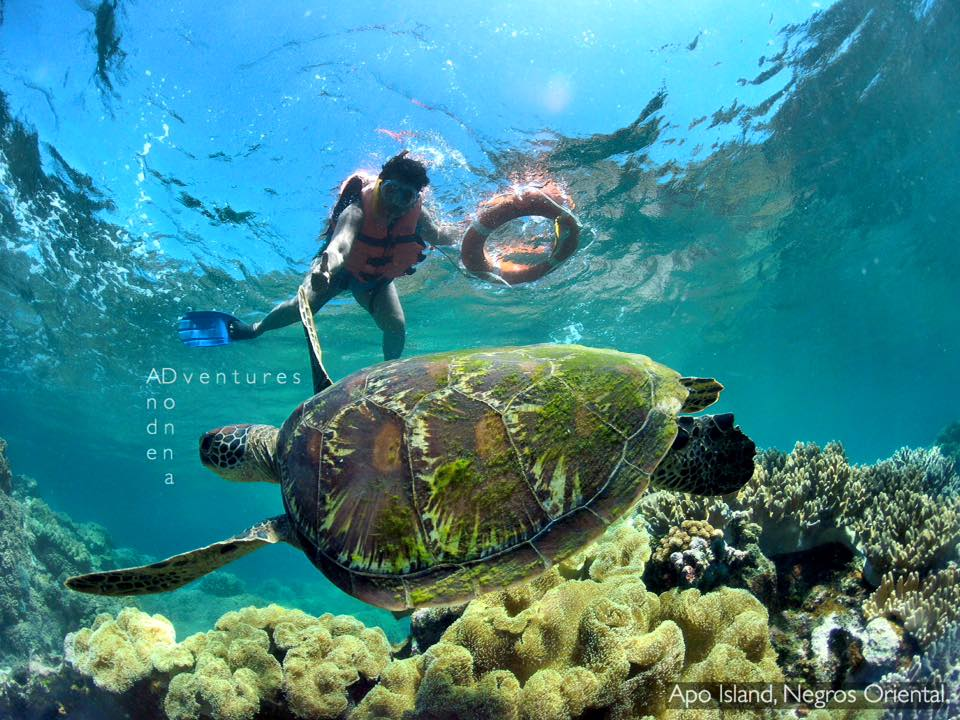 travel guide to apo island dumaguete