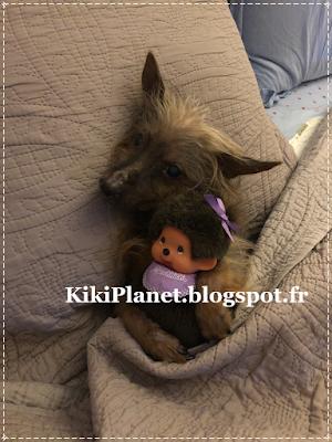 chien yorshire, câlins, dodo, nuit, monchhichi, kiki, vintage, mignon