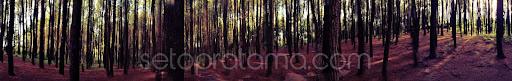 hutan pinus imogiri hutan lindung yogyakarta