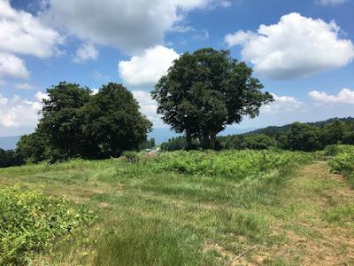 上の平高原 草地