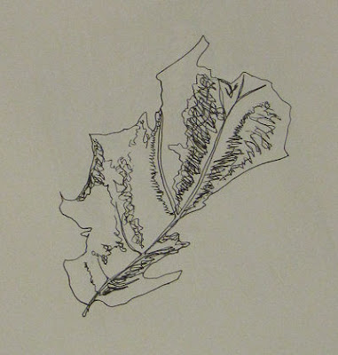 pen drawing of a dead leaf